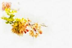 Wunsch der Baumblume Stockbild