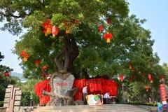Wunsch des Baums Stockbild