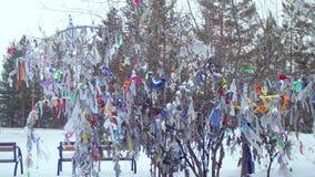 Wunschbaum in einem Park stock footage