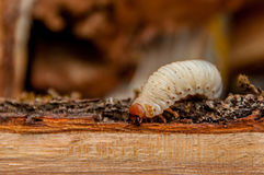 Wurm auf dem hölzernen Klotz Stockbild