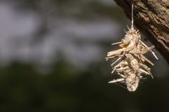 Wurmnest auf Baumnahaufnahme lizenzfreies stockfoto