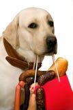 Wurst und ein Hund Lizenzfreies Stockbild