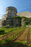 WURZBURG, GERMANY - MAY 11, 2015: A view of the Marienberg Fortress or Festung in Autumn with vineyard in front. WURZBURG, GERMANY - MAY 11, 2015: view of the Royalty Free Stock Photos