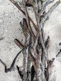 Wurzel auf dem Sand Lizenzfreies Stockbild