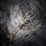 Wurzel auf einem Kompost-Haufen Stockfotos