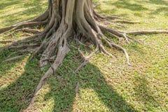 Wurzel auf Gras stockfotos