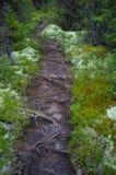 Wurzel-beladener Weg durch Wald Stockbilder