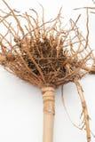 Wurzel des Bambusses Stockbild