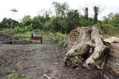 Wurzel des Banyanbaumes auf Archäologiestandort lizenzfreie stockfotografie