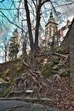 Wurzel des Baums Stockfotos