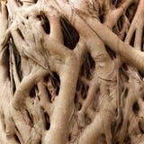 Wurzel des Baums Lizenzfreies Stockfoto