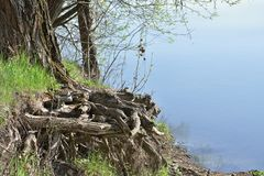 Wurzel durch den Fluss stockfotografie