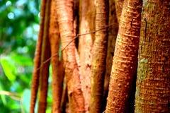 Wurzeln auf Baum im Dschungelhintergrund stockfotos