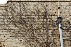 Wurzeln auf der Wand Stockfoto