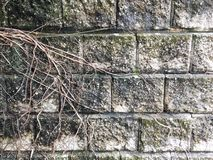 Wurzeln auf der Wand Lizenzfreies Stockbild