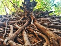 Wurzeln des Baums Lizenzfreies Stockfoto