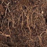 Wurzeln in einem Boden Stockfotografie