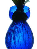 Wurzeln im Vase Lizenzfreie Stockbilder