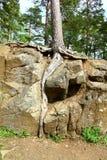 Wurzeln innerhalb des Steins lizenzfreies stockfoto