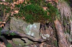 Wurzeln mit Felsen stockbild