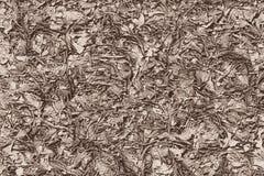 Wurzeln, Niederlassungen und Blätter aus den Grund im Herbst lizenzfreie abbildung