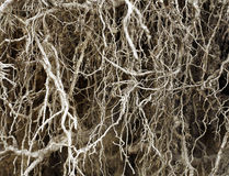 Wurzeln ohne Boden Lizenzfreie Stockbilder