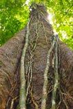 Wurzeln Sie Baum lizenzfreie stockfotografie