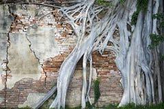 Wurzeln Sie Baum Lizenzfreies Stockbild