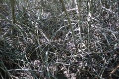 Wurzeln und Niederlassungen von Bäumen im Mangrovenwald bei Pranburi Forest Park Lizenzfreie Stockfotografie