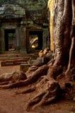 Wurzeln und Ruinen stockfoto