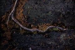 Wurzeln und Stein Stockbilder