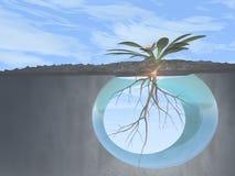 Wurzeln und Wachstum -- Blumen- und Kreuzansicht Stockfoto