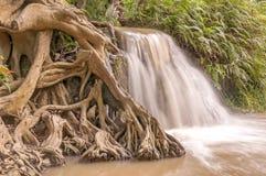 Wurzeln und Wasserfall Stockbilder