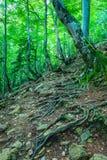 Wurzeln von den Bäumen sichtbar lizenzfreie stockfotografie