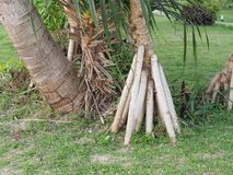 Wurzelt Baum graden an Lizenzfreie Stockfotografie
