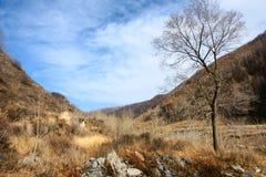 wutaishan Mt sceneria Zdjęcie Stock