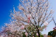 Cherry Blossom valley,wuxi,china. Wuxi Taihu Yuantouzhu Park Cherry Blossom valley stock photos