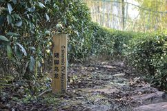 Wuyi Rock tea  demonstration garden Stock Image