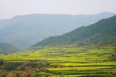 Wuyuan borracho imagen de archivo