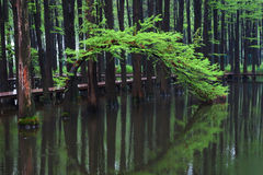Wuzhong water forest Royalty Free Stock Images