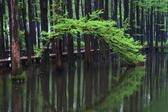 Wuzhong wody las Obrazy Royalty Free