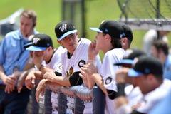 WV Czarnych niedźwiedzi baseball - pierwszy sezon Obrazy Royalty Free