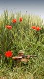 WW1 żołnierz w polu bitwy otaczającym maczkami zdjęcia royalty free