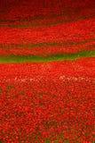 Башня дисплея WW1 мака Лондона Стоковые Фото