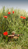 WW1 soldier in battlefield surrounded by poppies royalty free stock photos