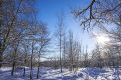 Wwinter landscape Stock Photography