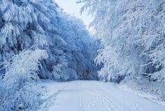Wwinter scenery in Carpathian mountains near Pezinok, Slovakia Royalty Free Stock Photos