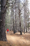 WWoman with red parka walking along forest trail Royalty Free Stock Photos