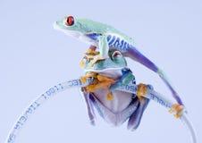 βάτραχος www στοκ φωτογραφίες με δικαίωμα ελεύθερης χρήσης