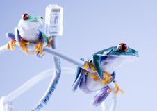 WWW-Frosch Lizenzfreie Stockbilder
